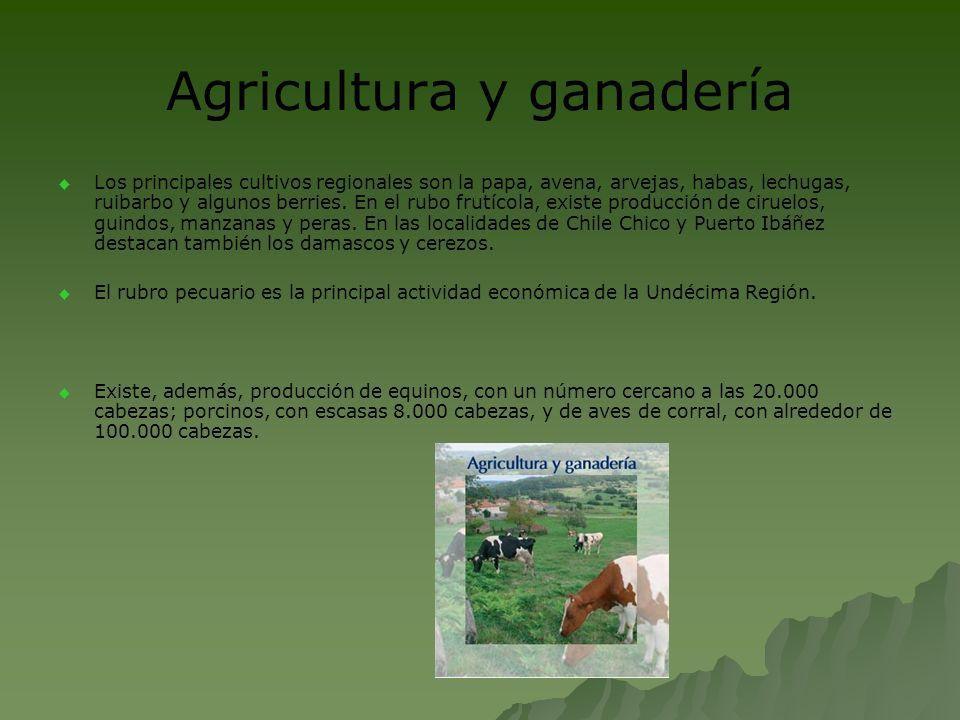 Agricultura y ganadería Los principales cultivos regionales son la papa, avena, arvejas, habas, lechugas, ruibarbo y algunos berries. En el rubo frutí