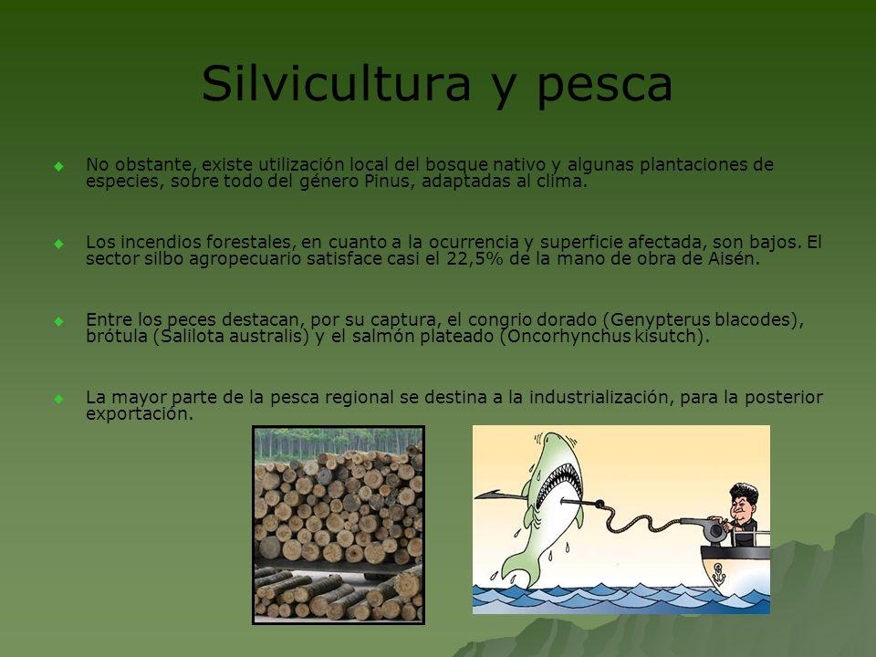 Silvicultura y pesca No obstante, existe utilización local del bosque nativo y algunas plantaciones de especies, sobre todo del género Pinus, adaptada