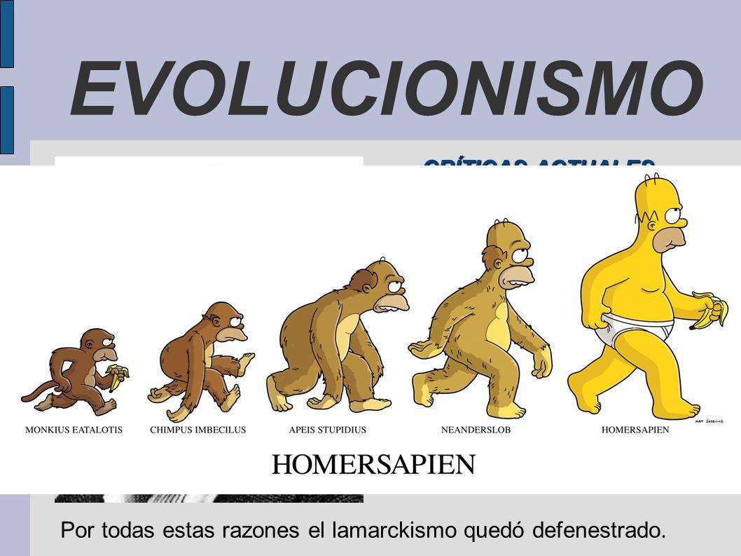 EVOLUCIONISMO CRÍTICAS ACTUALES El impulso interno de los seres vivos hacia la transformación. La complejidad creciente de los organismos. El mecanism