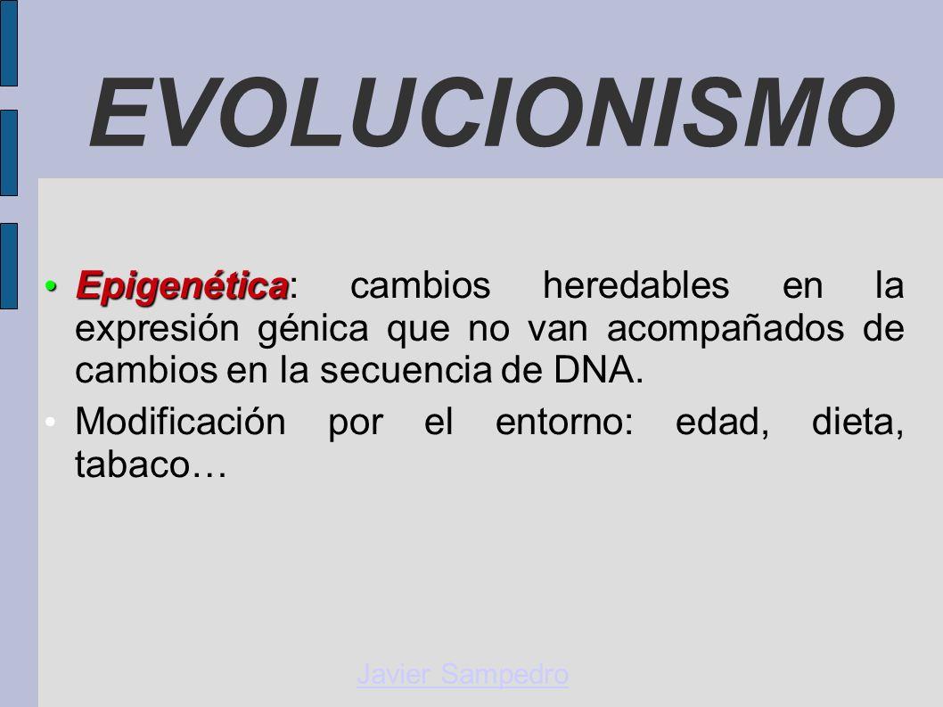 EVOLUCIONISMO Javier Sampedro Epigenética Epigenética: cambios heredables en la expresión génica que no van acompañados de cambios en la secuencia de