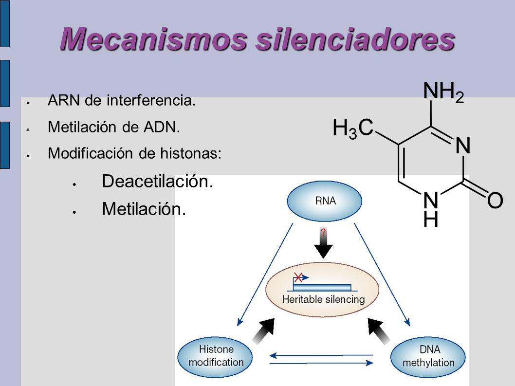 Mecanismos silenciadores ARN de interferencia. Metilación de ADN. Modificación de histonas: Deacetilación. Metilación.