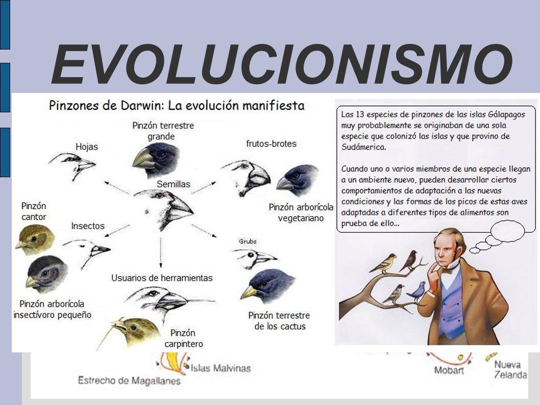 EVOLUCIONISMO ANTECEDENTES Argumento teológico del diseño EL VIAJE DEL BEAGLE. CHARLES LYELL: idea de sucesión y cambio gradual. THOMAS MALTHUS: lucha