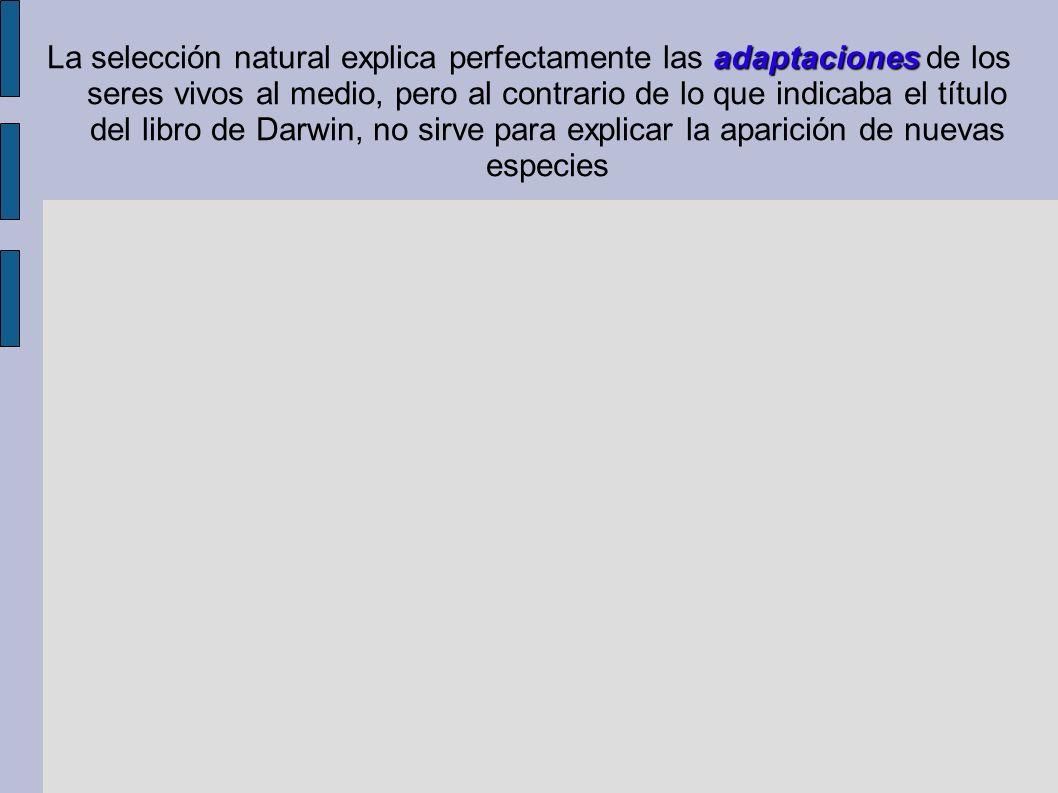 adaptaciones La selección natural explica perfectamente las adaptaciones de los seres vivos al medio, pero al contrario de lo que indicaba el título d
