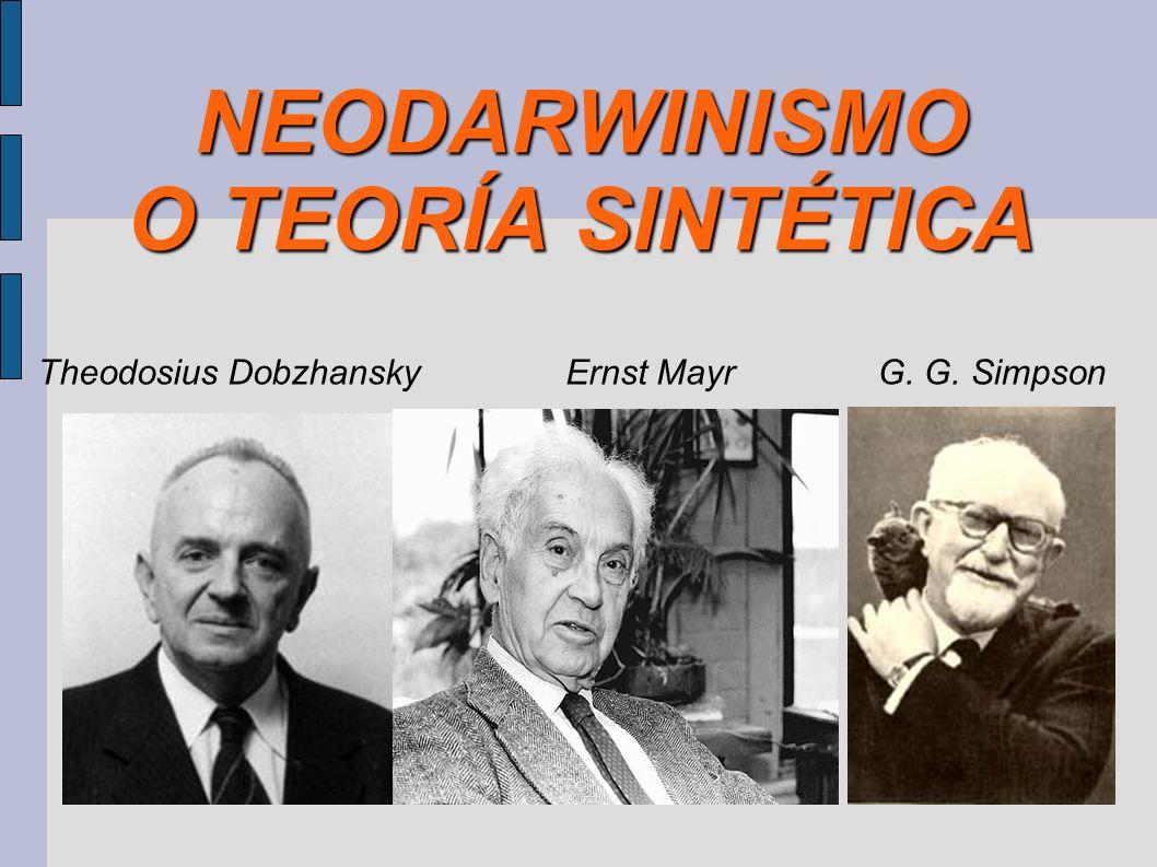 NEODARWINISMO O TEORÍA SINTÉTICA Theodosius DobzhanskyErnst MayrG. G. Simpson