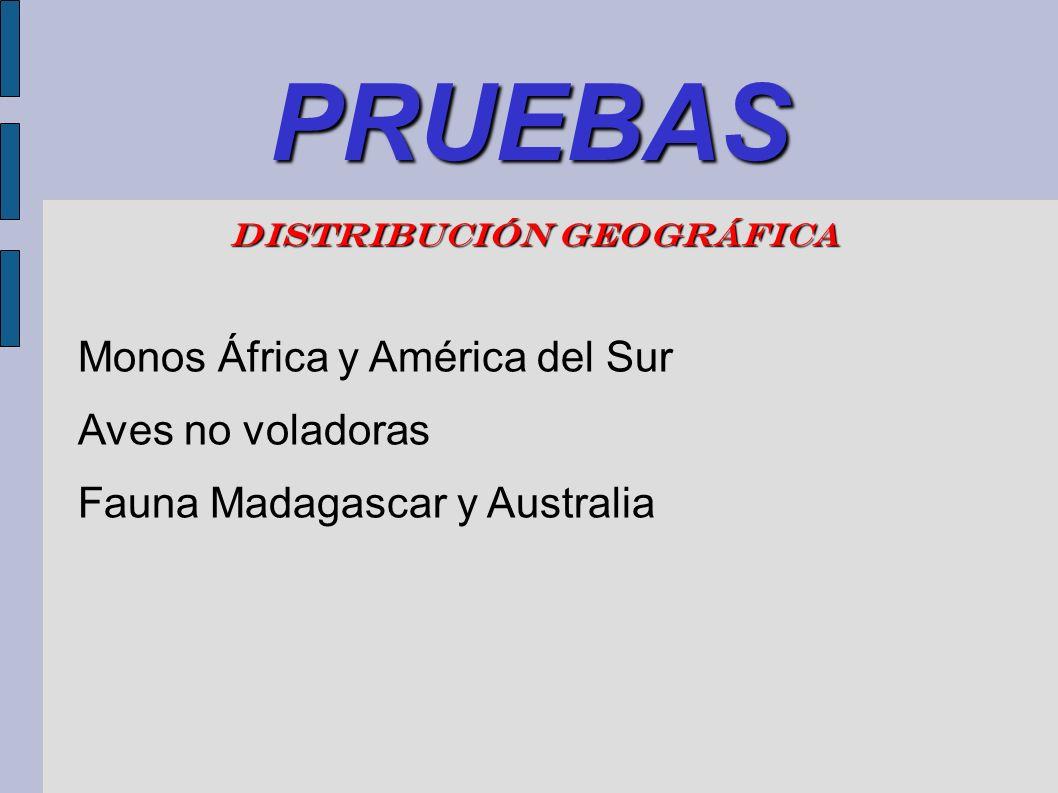 PRUEBAS DISTRIBUCIÓN GEOGRÁFICA Monos África y América del Sur Aves no voladoras Fauna Madagascar y Australia