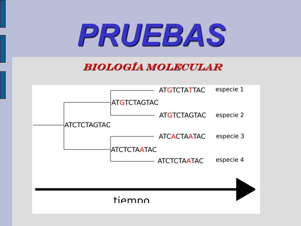 PRUEBAS Biología molecular