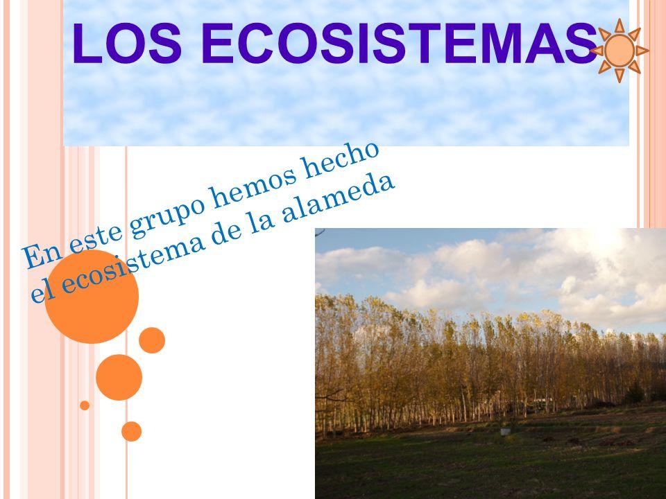 LOS ECOSISTEMAS En este grupo hemos hecho el ecosistema de la alameda