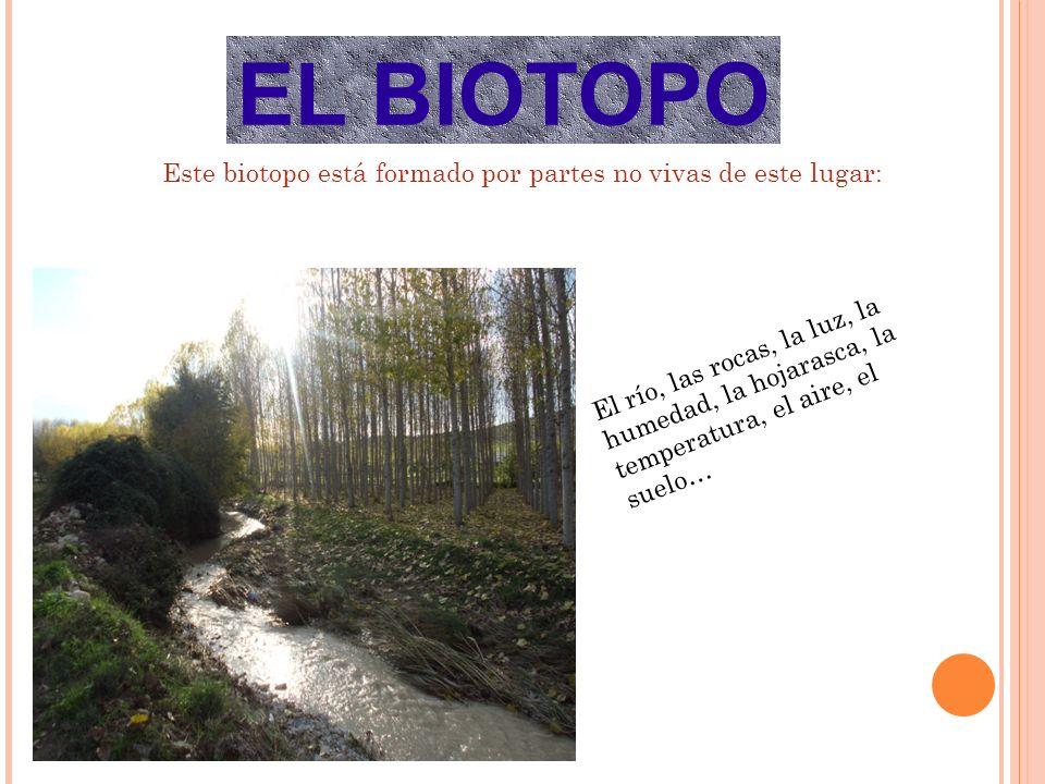 Este biotopo está formado por partes no vivas de este lugar: El río, las rocas, la luz, la humedad, la hojarasca, la temperatura, el aire, el suelo… EL BIOTOPO
