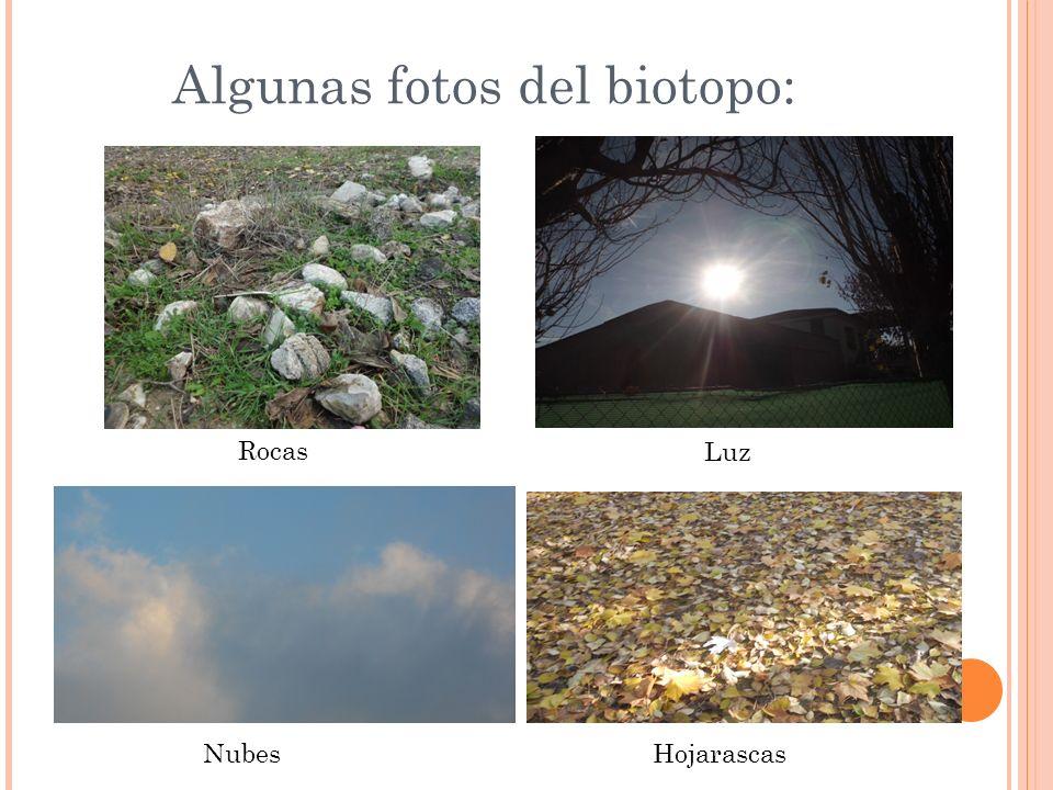 Algunas fotos del biotopo: Rocas Luz NubesHojarascas
