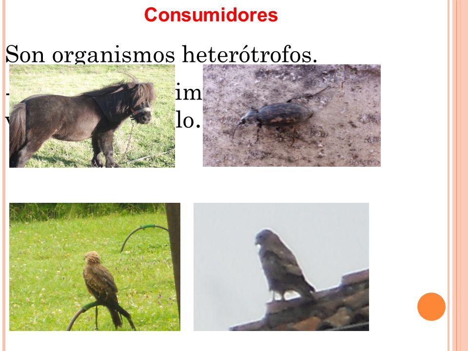 -Omnívoros, se alimentan de carnes y plantas: gato… -Carroñeros, se alimentan de cadáveres: hormigas...
