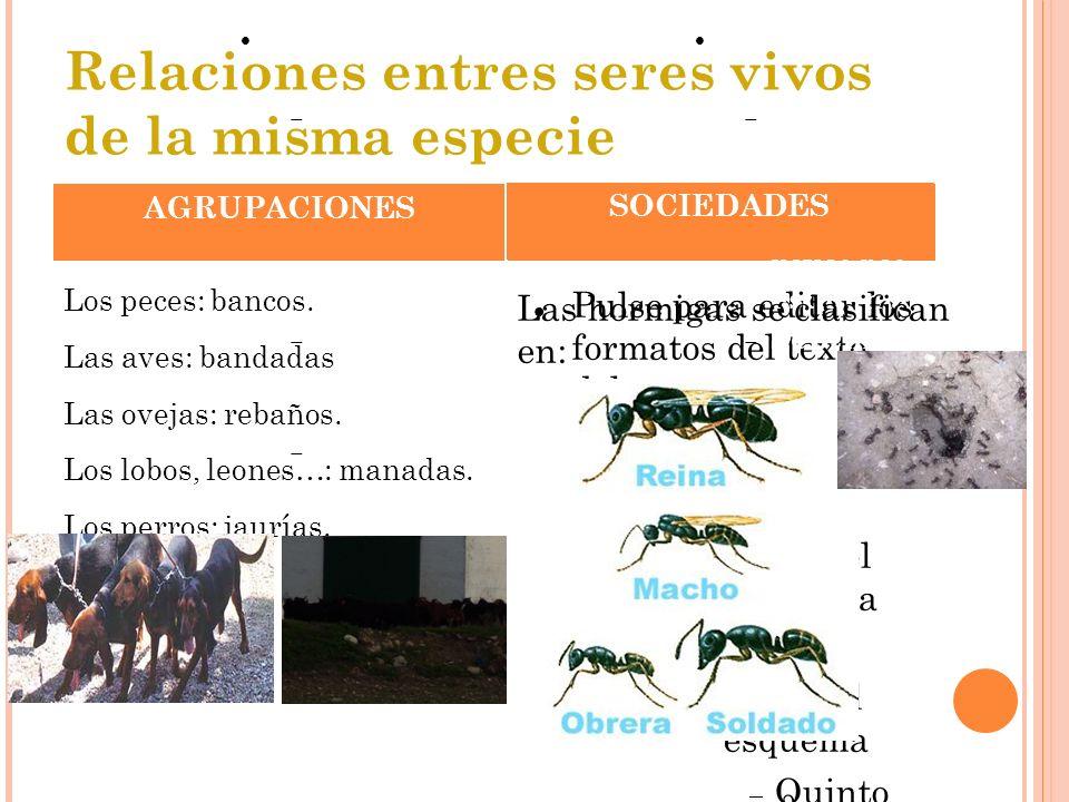 ParasitismoComensalismoMutualismo Relaciones entre seres vivos de distinta especie