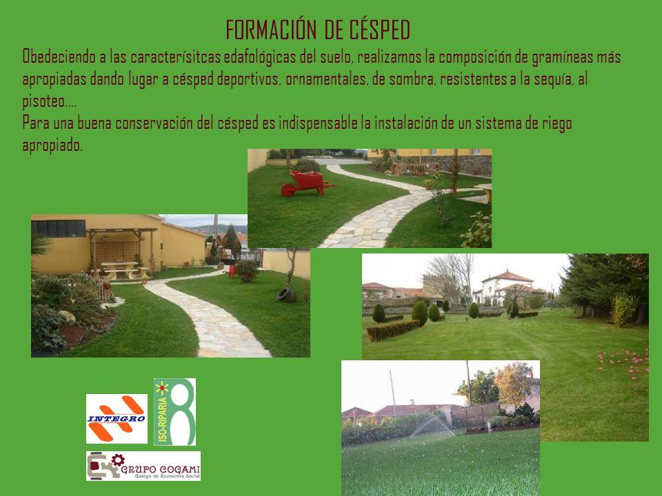 FORMACIÓN DE CÉSPED Obedeciendo a las caracterísitcas edafológicas del suelo, realizamos la composición de gramíneas más apropiadas dando lugar a césp