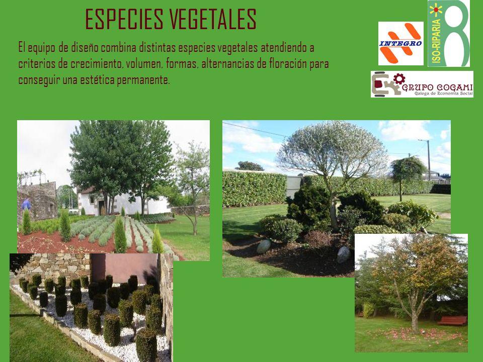 ESPECIES VEGETALES El equipo de diseño combina distintas especies vegetales atendiendo a criterios de crecimiento, volumen, formas, alternancias de fl