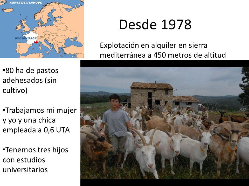REBAÑO 42 cabras + 11 chivas + 2 machos Sin concentrados Cebada: 0,6 kg/día Avena: 0,2 kg/día Forraje : 1,5-2,5 kg de alfalfa (cabras) 2 kg de heno (chivas) 3 horas/día de pastoreo controlado Lactación de Febrero a Noviembre