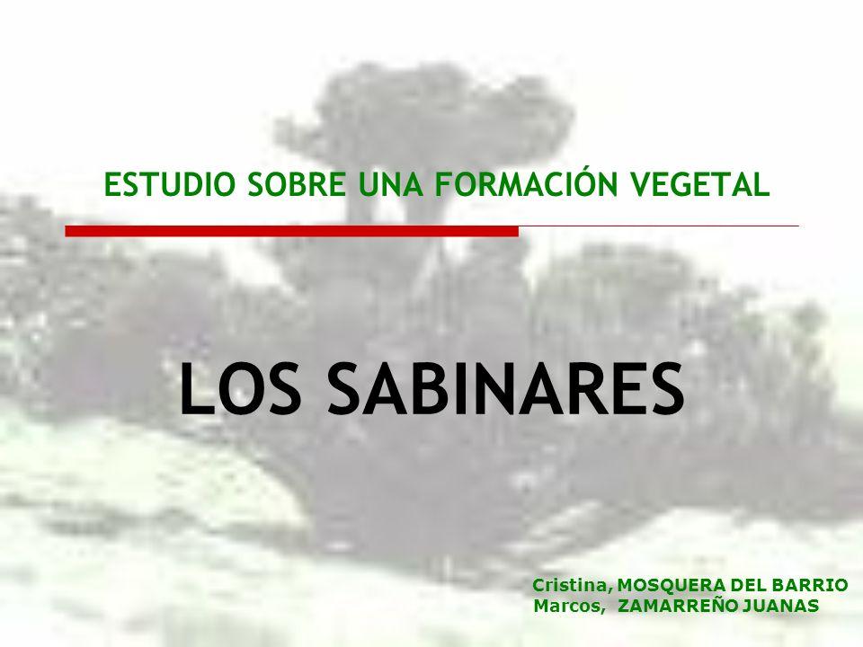ESTUDIO SOBRE UNA FORMACIÓN VEGETAL LOS SABINARES Cristina, MOSQUERA DEL BARRIO Marcos, ZAMARREÑO JUANAS
