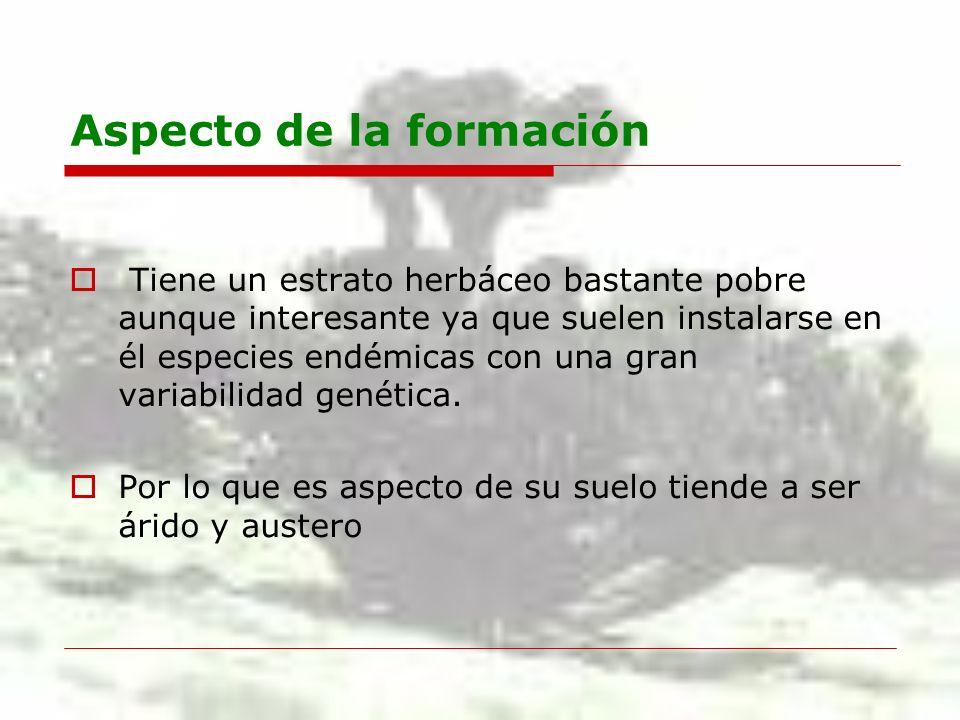 Aspecto de la formación Tiene un estrato herbáceo bastante pobre aunque interesante ya que suelen instalarse en él especies endémicas con una gran var