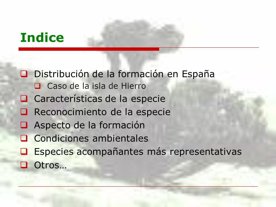 Indice Distribución de la formación en España Caso de la isla de Hierro Características de la especie Reconocimiento de la especie Aspecto de la forma