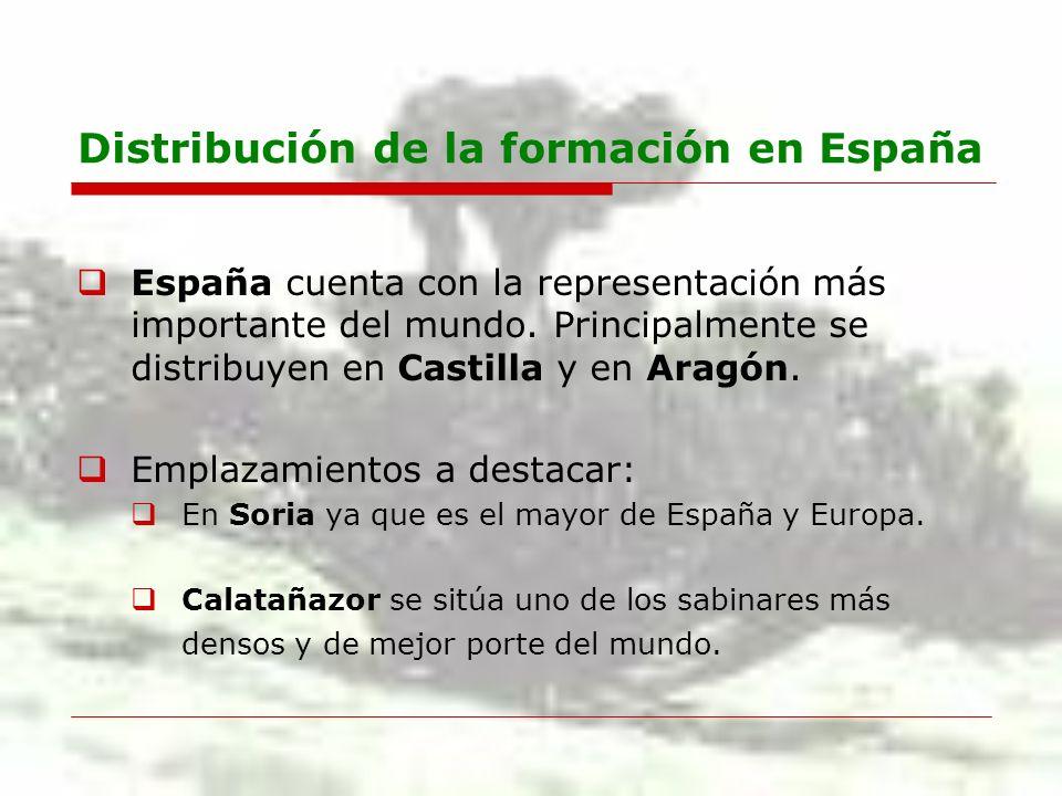 Distribución de la formación en España España cuenta con la representación más importante del mundo. Principalmente se distribuyen en Castilla y en Ar