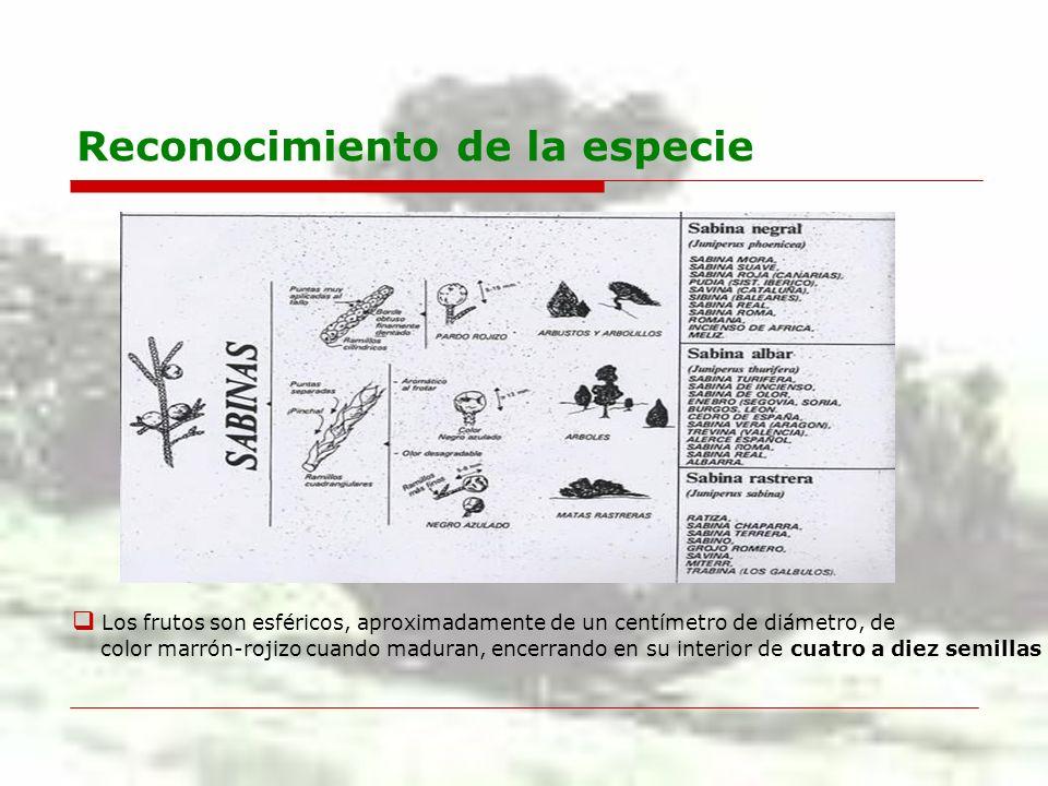 Aspecto de la formación Forma bosques relictos, reliquias del terciario.