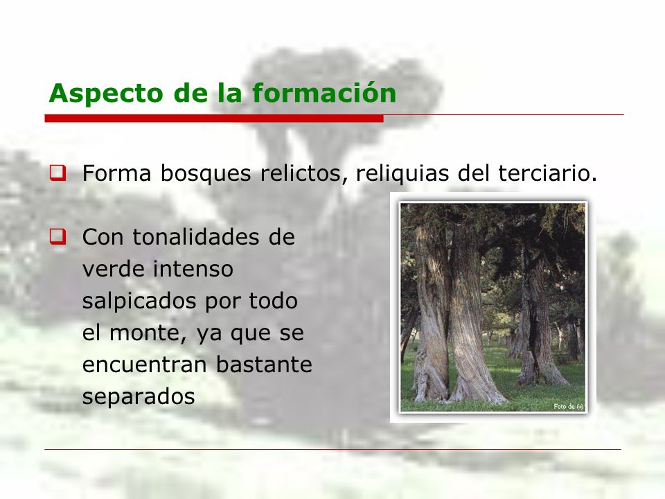 Aspecto de la formación Forma bosques relictos, reliquias del terciario. Con tonalidades de verde intenso salpicados por todo el monte, ya que se encu