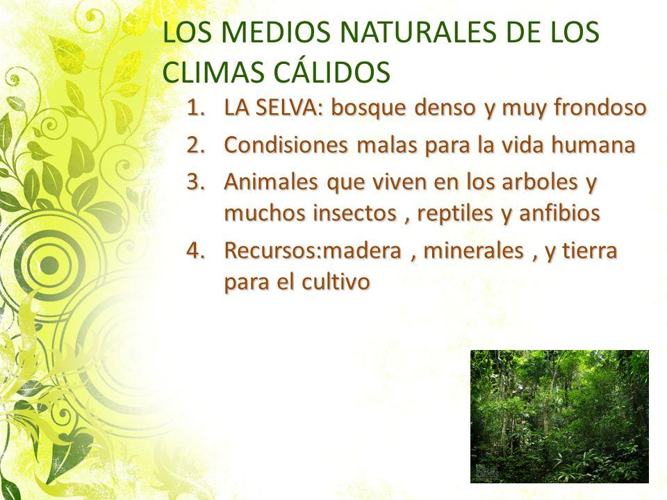 LOS MEDIOS NATURALES DE LOS CLIMAS CÁLIDOS 1.LA SELVA: bosque denso y muy frondoso 2.Condisiones malas para la vida humana 3.Animales que viven en los