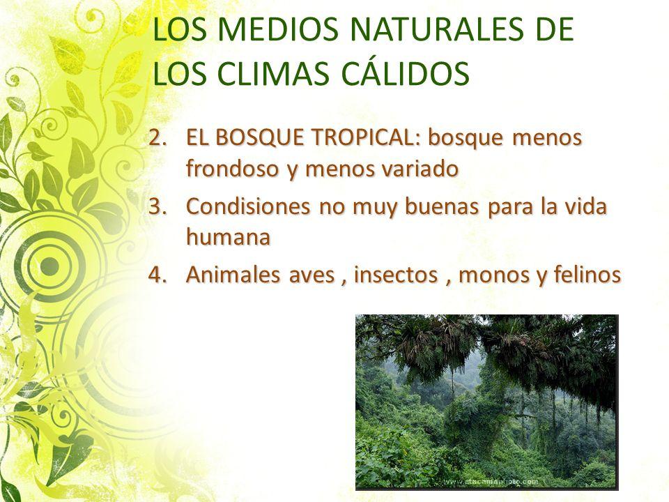 LOS MEDIOS NATURALES DE LOS CLIMAS CÁLIDOS 2.EL BOSQUE TROPICAL: bosque menos frondoso y menos variado 3.Condisiones no muy buenas para la vida humana
