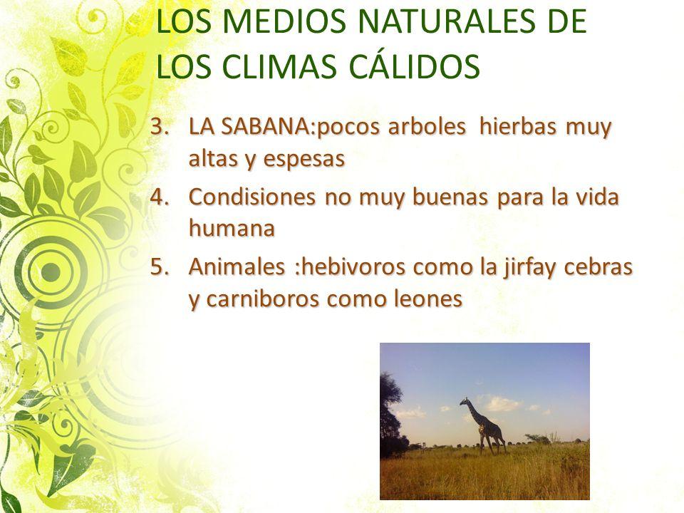 LOS MEDIOS NATURALES DE LOS CLIMAS CÁLIDOS 3.LA SABANA:pocos arboles hierbas muy altas y espesas 4.Condisiones no muy buenas para la vida humana 5.Ani