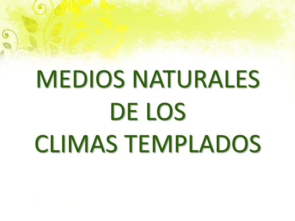 LOS MEDIOS NATURALES DE LOS CLIMAS TEMPLADOS 1.EL BOSQUE MEDITERRÁNEO: 2.formado por árboles no muy altos:pinos, encinas y arcornoques 3.Matorrales mediterraneo:tomillo, romero, espliego (la vanda )