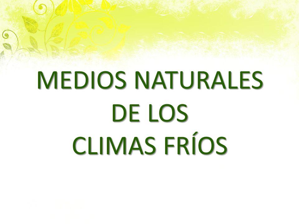 LOS MEDIOS NATURALES DE LOS CLIMAS FRÍOS 1.LA TUNDRA:gran llanura sin árboles con musgos y liquenes y algún arbusto