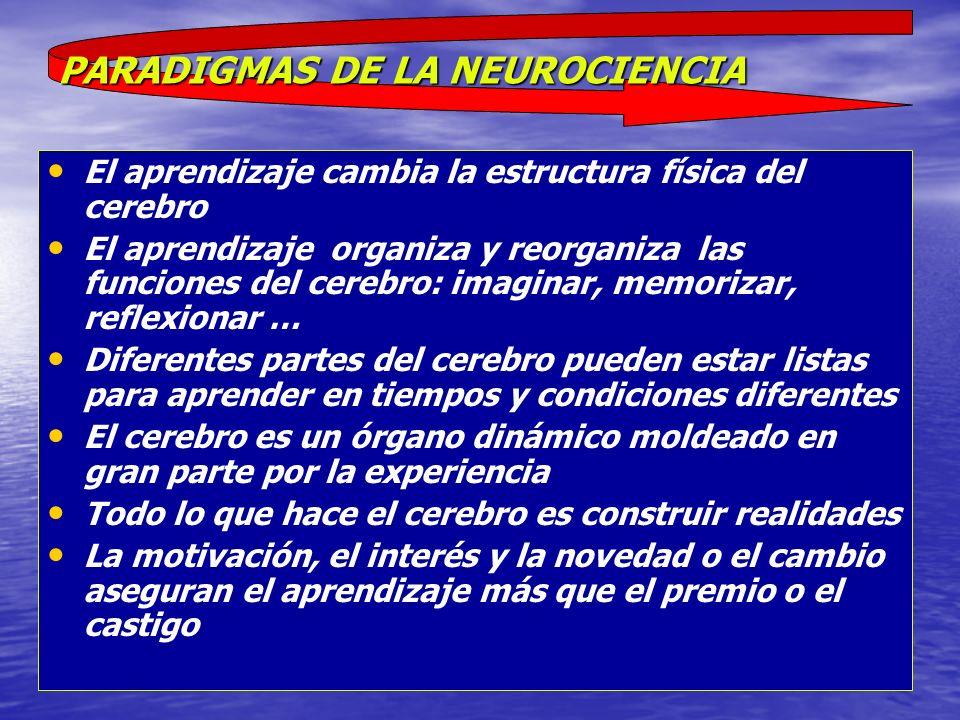 El aprendizaje cambia la estructura física del cerebro El aprendizaje organiza y reorganiza las funciones del cerebro: imaginar, memorizar, reflexiona