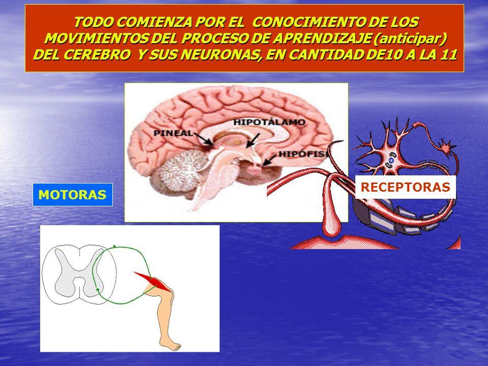 TODO COMIENZA POR EL CONOCIMIENTO DE LOS MOVIMIENTOS DEL PROCESO DE APRENDIZAJE (anticipar) DEL CEREBRO Y SUS NEURONAS, EN CANTIDAD DE10 A LA 11 RECEP