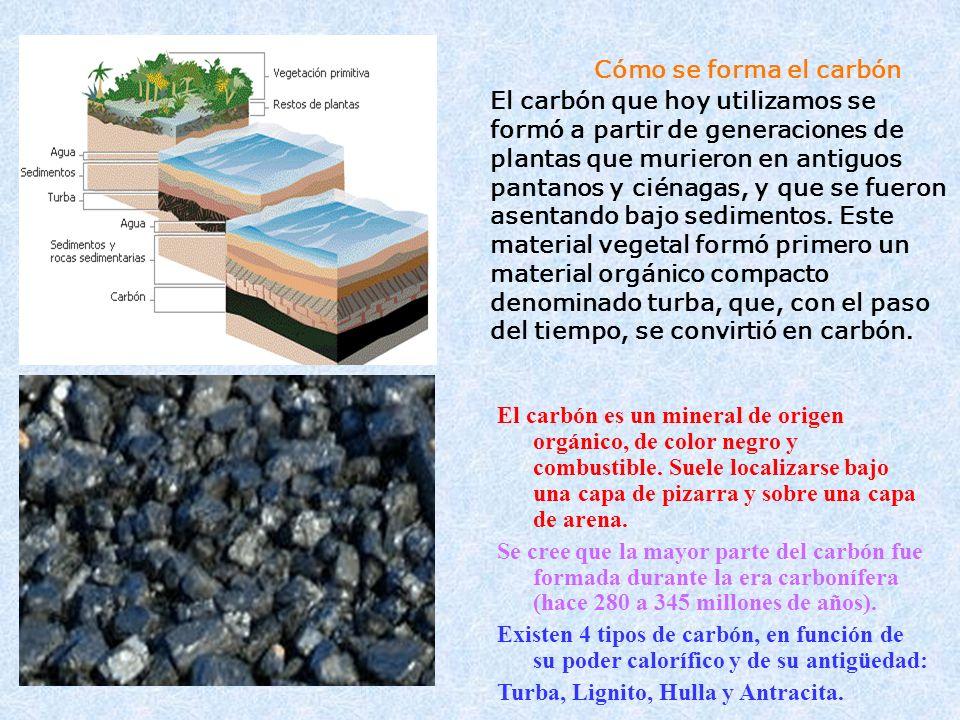 Cómo se forma el carbón El carbón que hoy utilizamos se formó a partir de generaciones de plantas que murieron en antiguos pantanos y ciénagas, y que