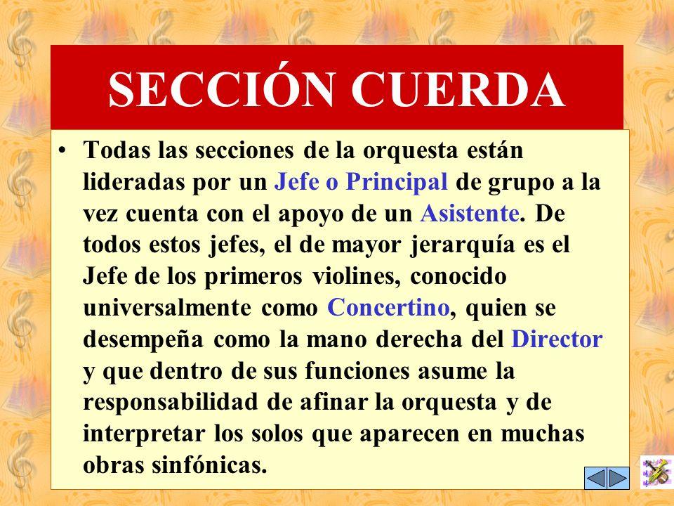 SECCIÓN CUERDA Conforma el mayor número de integrantes de la orquesta y sus instrumentos al igual que en todas las familias emiten desde los sonidos m