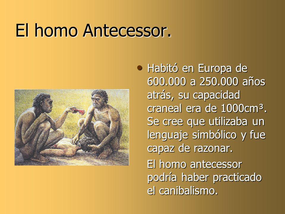 El homo Antecessor. Habitó en Europa de 600.000 a 250.000 años atrás, su capacidad craneal era de 1000cm³. Se cree que utilizaba un lenguaje simbólico