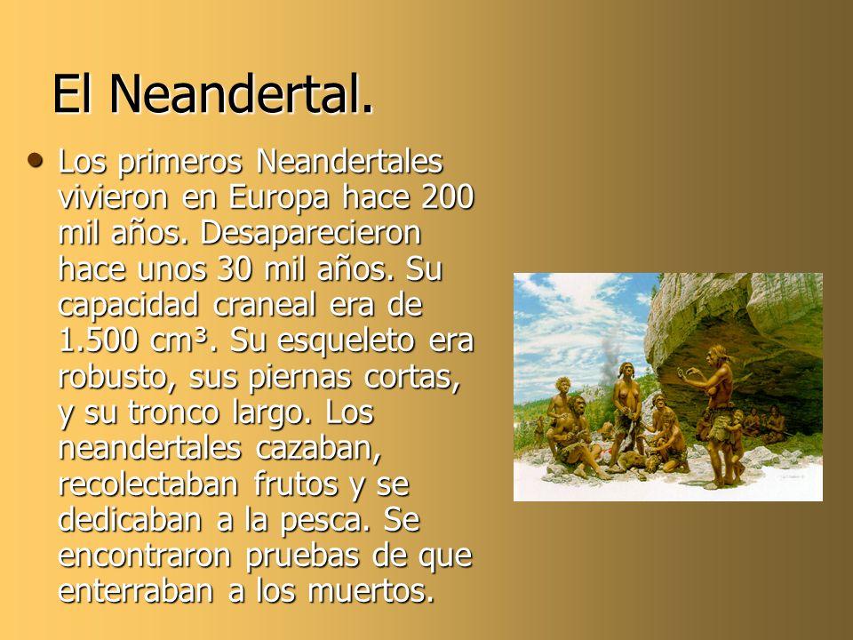 El Neandertal. Los primeros Neandertales vivieron en Europa hace 200 mil años. Desaparecieron hace unos 30 mil años. Su capacidad craneal era de 1.500