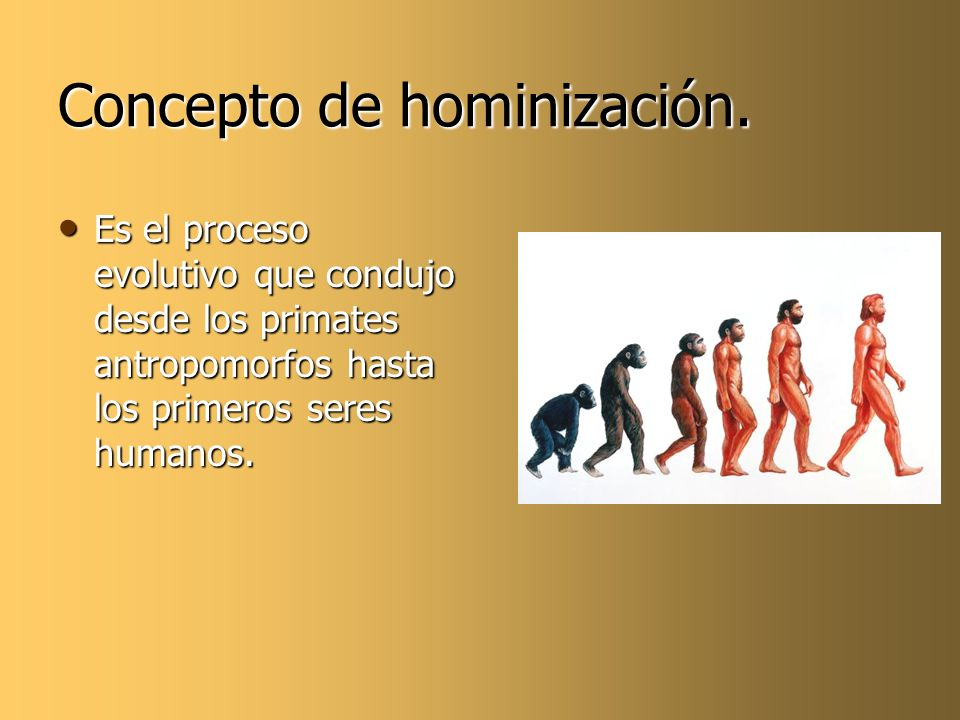 Concepto de hominización. Es el proceso evolutivo que condujo desde los primates antropomorfos hasta los primeros seres humanos. Es el proceso evoluti