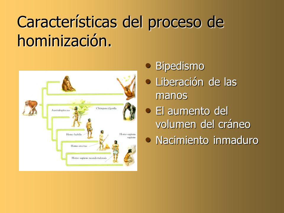 Características del proceso de hominización. Bipedismo Bipedismo Liberación de las manos Liberación de las manos El aumento del volumen del cráneo El