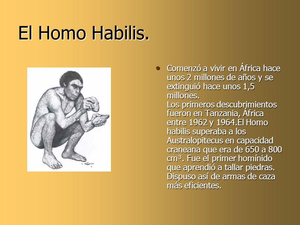 El Homo Habilis. Comenzó a vivir en África hace unos 2 millones de años y se extinguió hace unos 1,5 millones. Los primeros descubrimientos fueron en