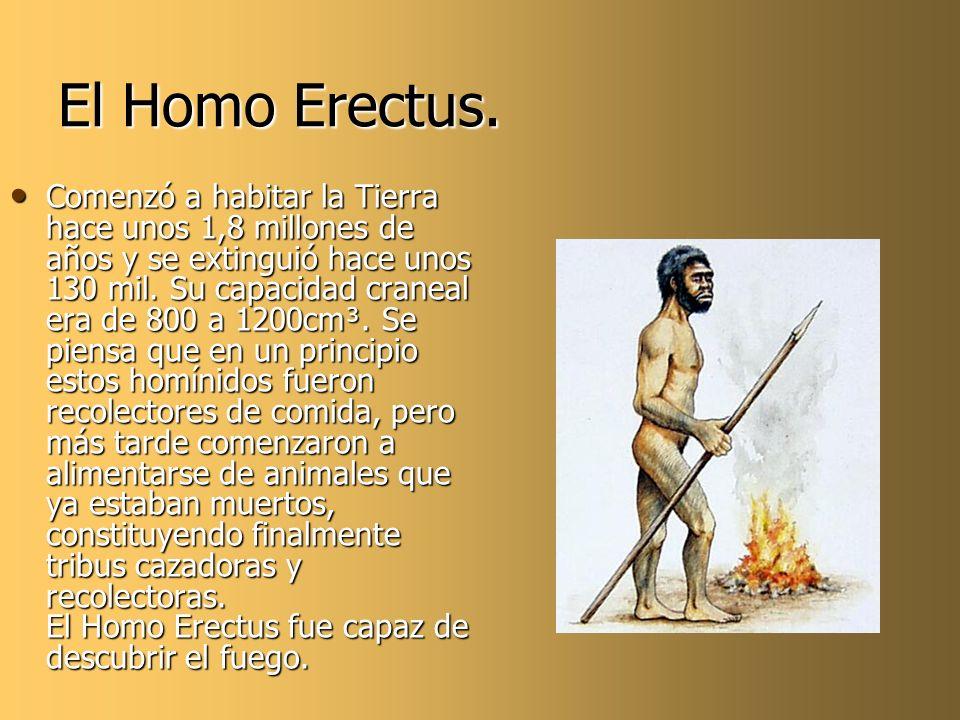El Homo Erectus. Comenzó a habitar la Tierra hace unos 1,8 millones de años y se extinguió hace unos 130 mil. Su capacidad craneal era de 800 a 1200cm