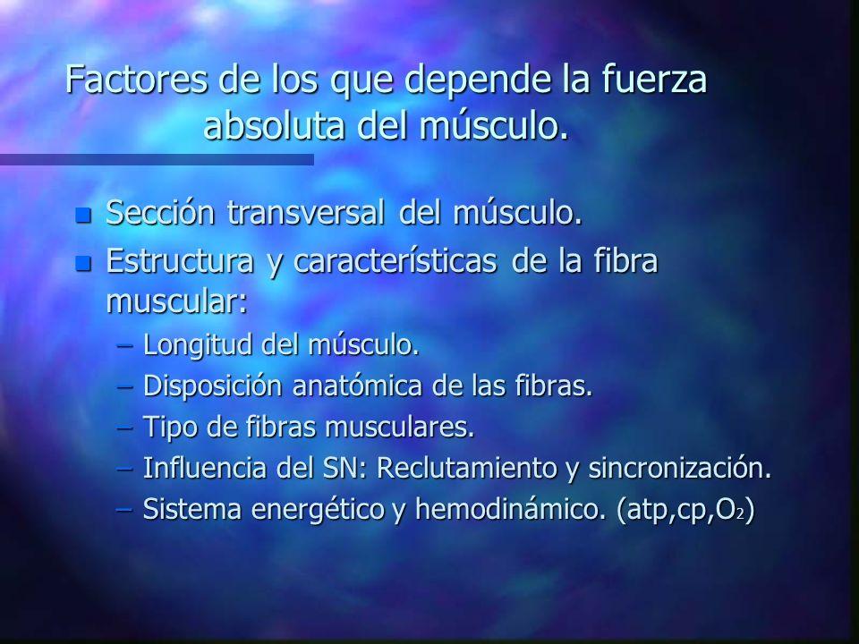 Factores de los que depende la fuerza absoluta del músculo.