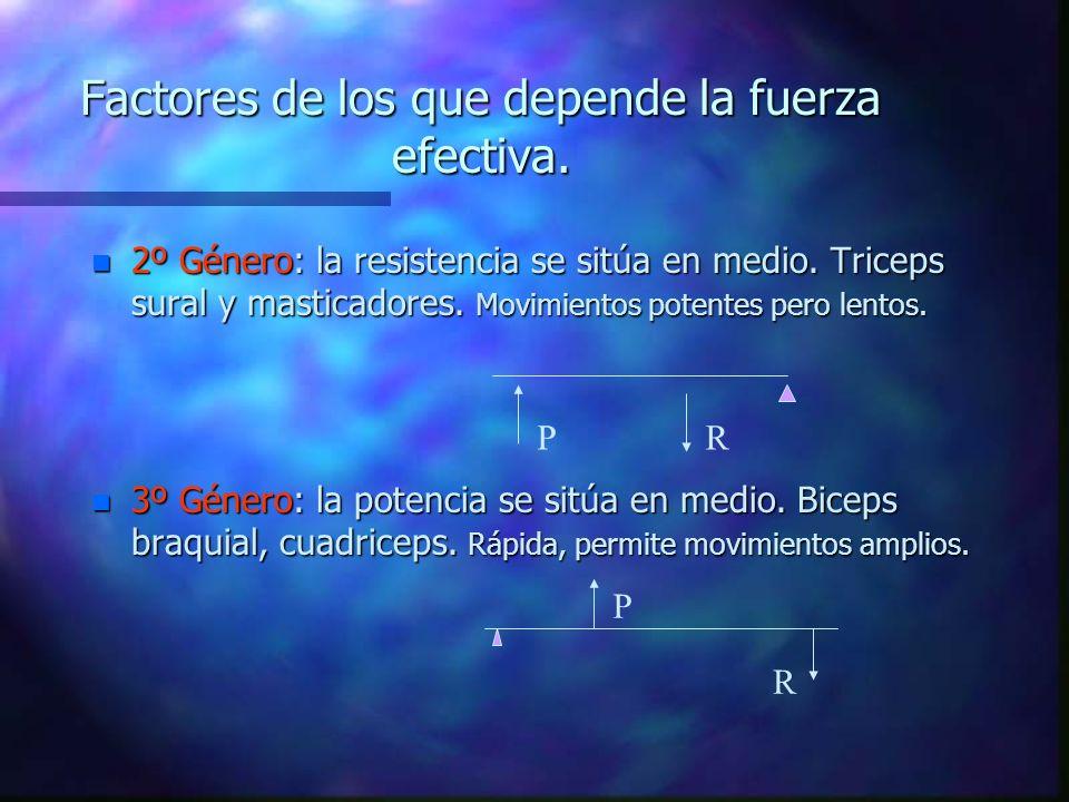 Factores de los que depende la fuerza efectiva.n 2º Género: la resistencia se sitúa en medio.