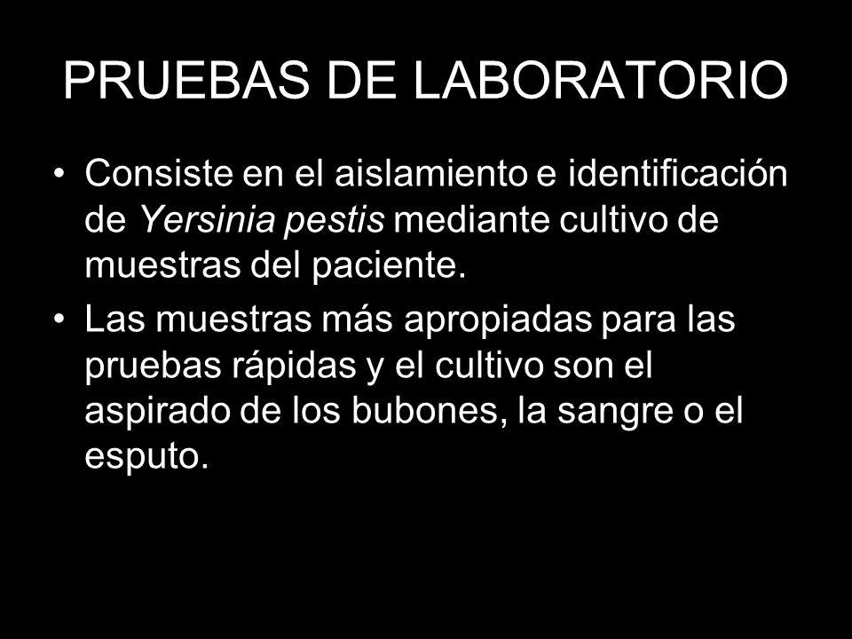 PRUEBAS DE LABORATORIO Consiste en el aislamiento e identificación de Yersinia pestis mediante cultivo de muestras del paciente. Las muestras más apro