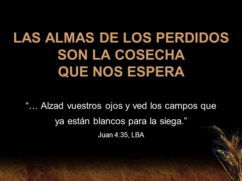 LAS ALMAS DE LOS PERDIDOS SON LA COSECHA QUE NOS ESPERA … Alzad vuestros ojos y ved los campos que ya están blancos para la siega. Juan 4:35, LBA