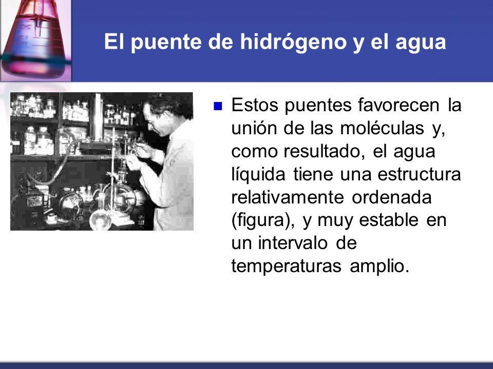 El puente de hidrógeno y el agua Estos puentes favorecen la unión de las moléculas y, como resultado, el agua líquida tiene una estructura relativamen
