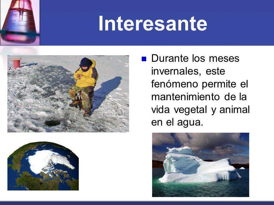 Interesante Durante los meses invernales, este fenómeno permite el mantenimiento de la vida vegetal y animal en el agua.