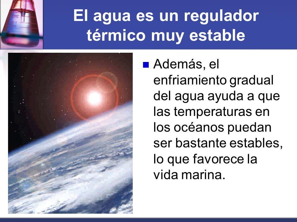 El agua es un regulador térmico muy estable Además, el enfriamiento gradual del agua ayuda a que las temperaturas en los océanos puedan ser bastante e