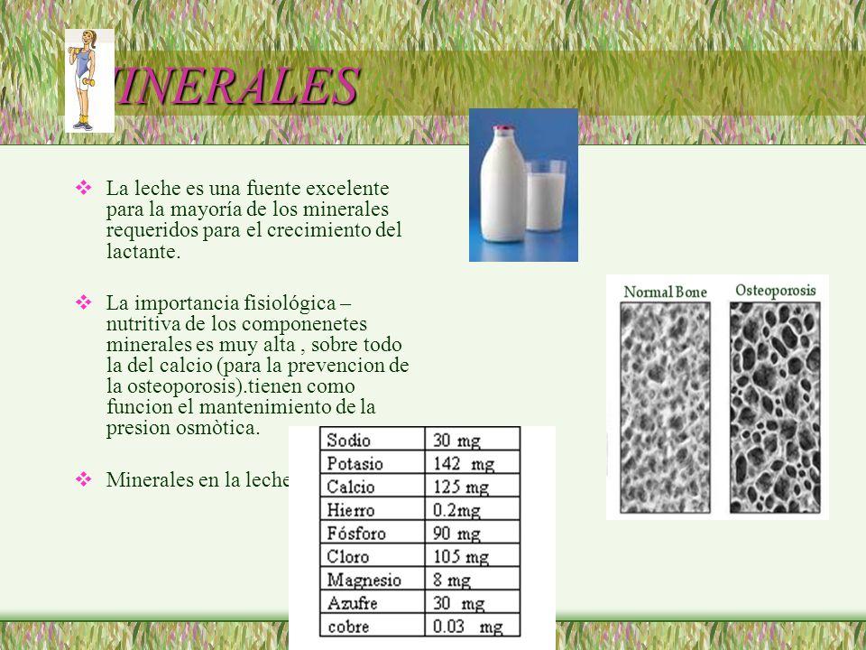 MINERALES La leche es una fuente excelente para la mayoría de los minerales requeridos para el crecimiento del lactante. La importancia fisiológica –