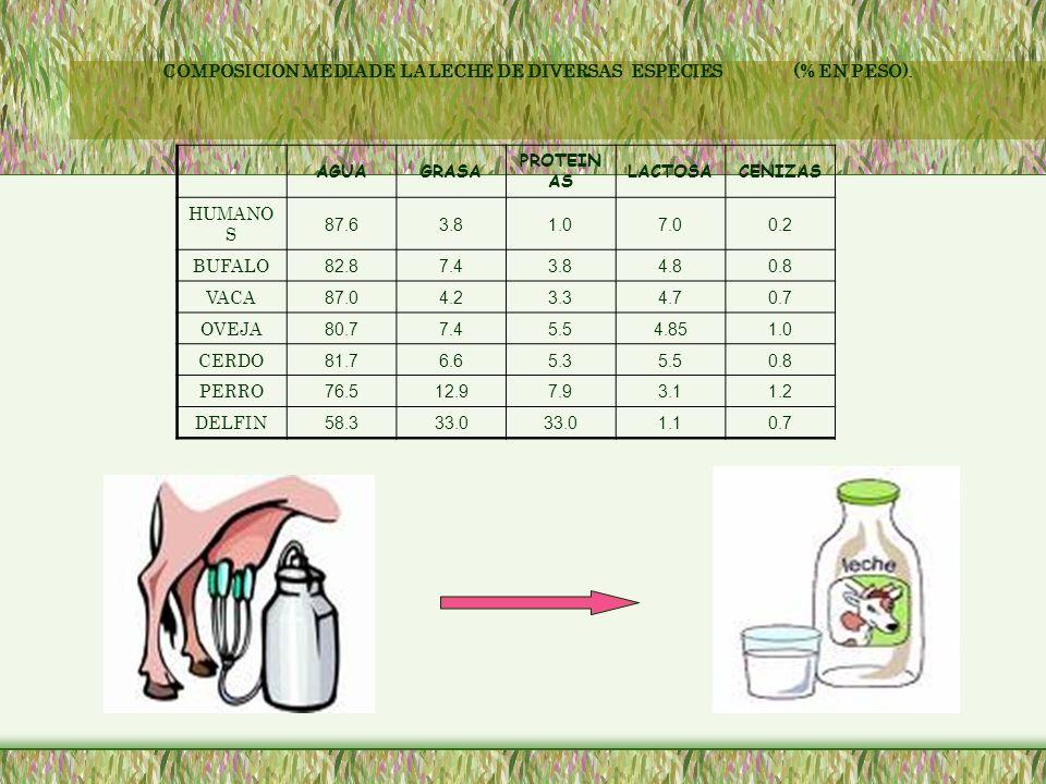 Selección y preparación de la leche Maduración de la leche Elaboración de queso Formación de la cuajada calentamiento Desueramiento Prensado La leche es sometida a diferentes tratamientos: cantidad de grasa necesaria o también una clarificación Acá se da a el proceso de pasteurización Se agrega 0.25 a 0.5% de iniciador Se deja madurar hasta que a la acidez titulable de 0.17-0.20% La caseína es coagulada por acción de la renina Después de esto se corta la cuajada en trozos La temperatura del suero que rodea la cuajada es subida a 104º F Se remueve el suero y se apila la cuajada para que drene (el suero) Después de esto se agrega sal de 1 a 2 y media libras por mil libras de leche Los moldes son colocados en el prensador x 24 horas Lentamente la caseína y la grasa se convierten en una compleja red.