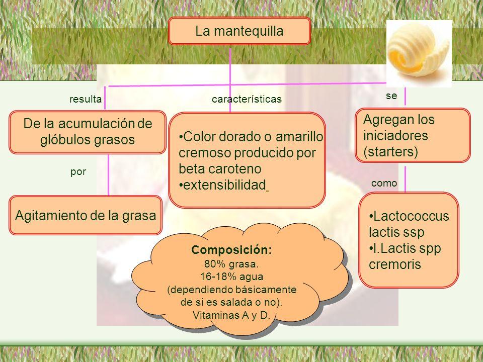 La mantequilla De la acumulación de glóbulos grasos Agitamiento de la grasa Color dorado o amarillo cremoso producido por beta caroteno extensibilidad