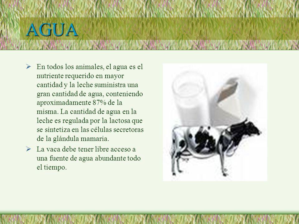 AGUA En todos los animales, el agua es el nutriente requerido en mayor cantidad y la leche suministra una gran cantidad de agua, conteniendo aproximad